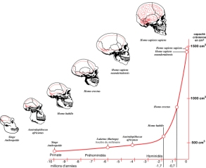The curve of our brain